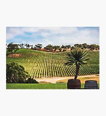 Southern Vineyard (GO) Photographic Print