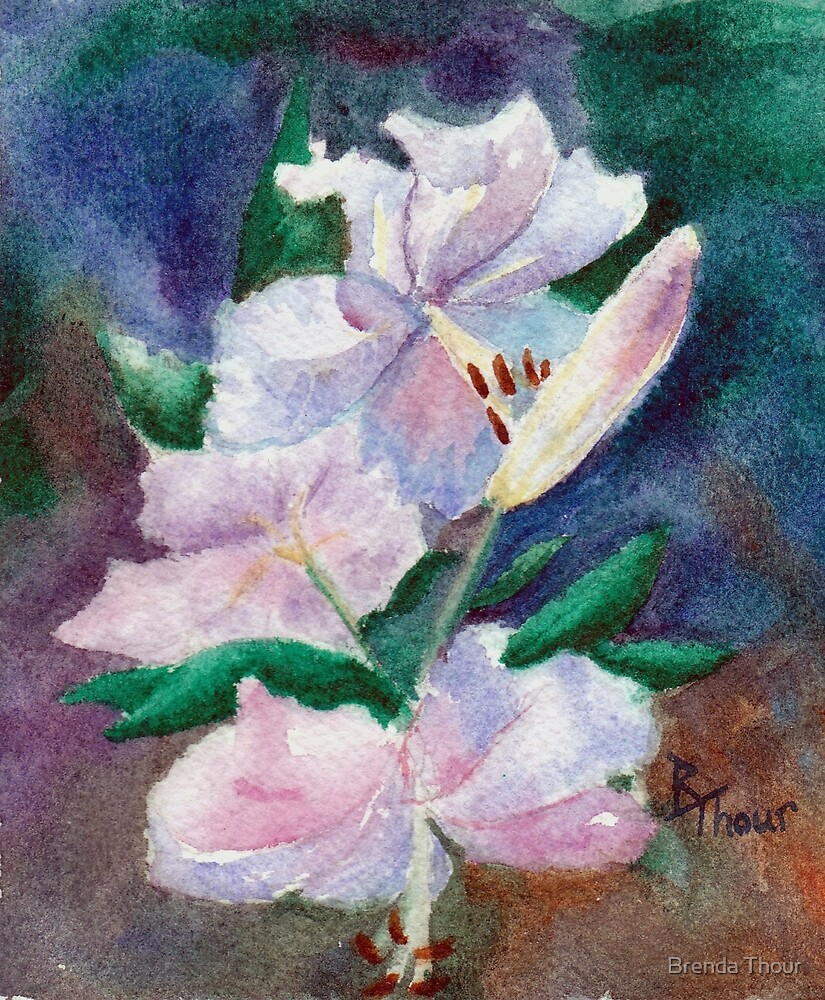 Lily Study by Brenda Thour