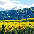 Denali - Golden Valley by mcstory