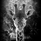 charmante Giraffe von Marianna Tankelevich