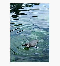 Open Water Photographic Print