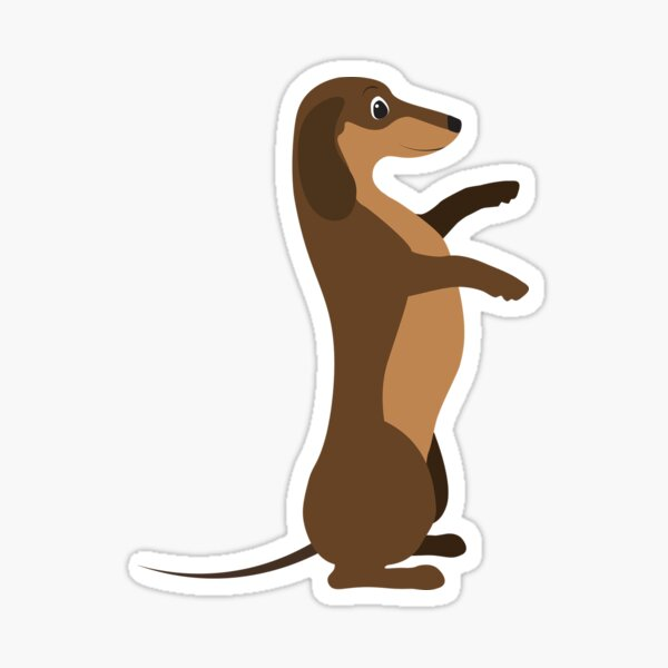 Chocolate Dachshund standing on back legs Sticker