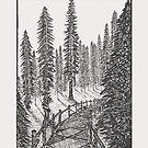 Kohlenstoff-Schlucht-Rotholz-Waldungs-Spur von Hinterlund