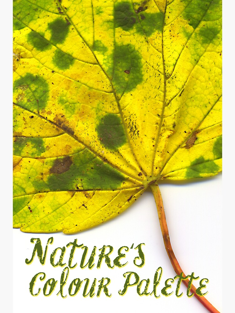 Nature's Colour Palette by hoxtonboy