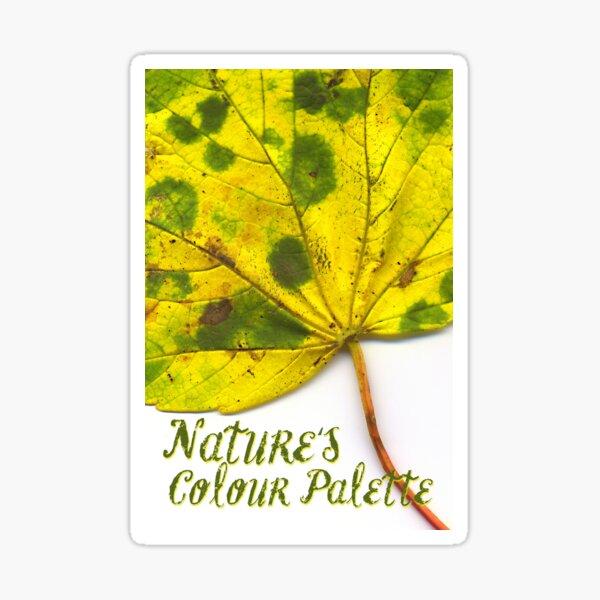 Nature's Colour Palette Sticker