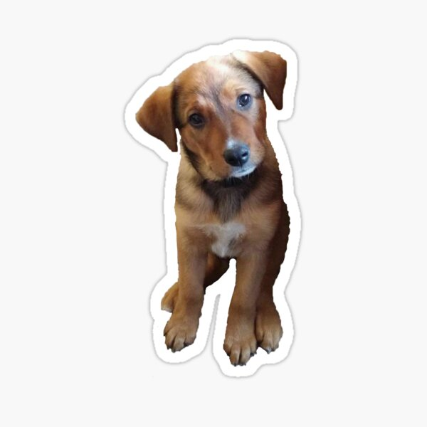 Australian Shepherd/Cattle Dog Mix #2 Sticker