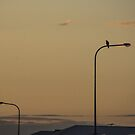 Evening Watcher by dcarphoto