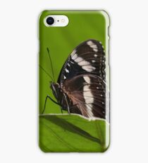 Common Eggfly (female) iPhone Case/Skin