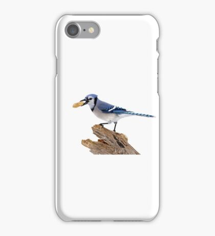 This is my peanut! Blue Jay iPhone Case/Skin