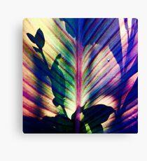 Canna Lily Leaf Canvas Print
