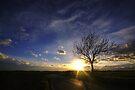 Sunset Tree by Nigel Bangert