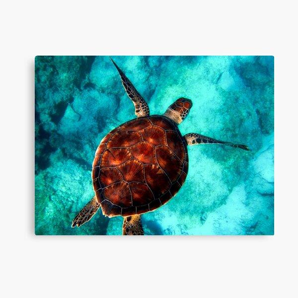 Blue ocean sea turtle - summer sea swimming  turtle Canvas Print