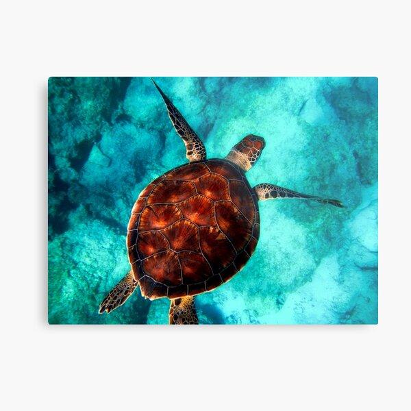 Blue ocean sea turtle - summer sea swimming  turtle Metal Print
