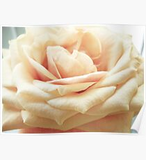 Gentle Rose Poster