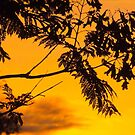 Jacaranda Sunset by MikeSquires