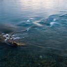 Feeling the Flow _ Rakaia River New Zealand by Barbara Burkhardt
