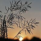 Grasses by AbigailJoy