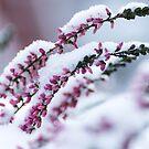Winter Flowers by SunDwn