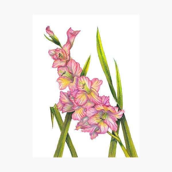 Gladiolus Photographic Print
