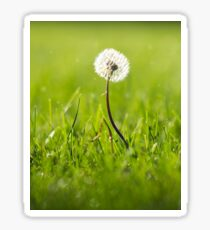 Autumn Dandelion Photograph Sticker