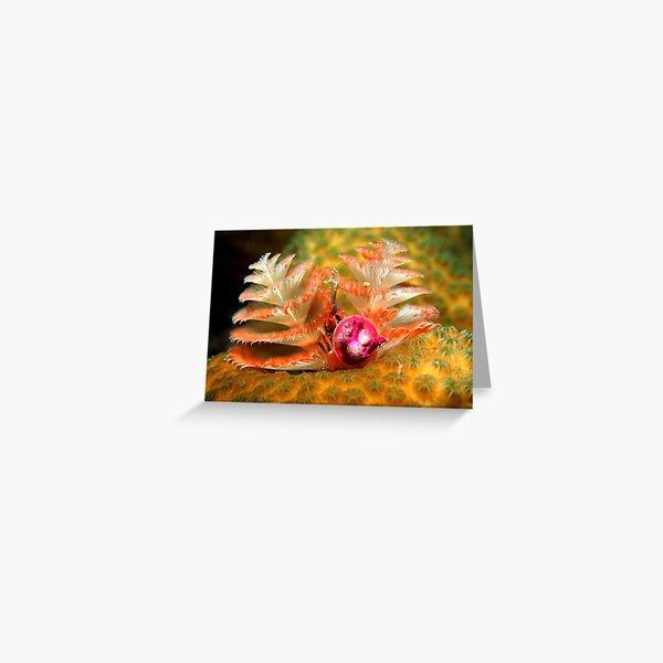 Christmas tree worms Greeting Card