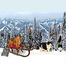 Sledding with Cats by Karen Del Pellegrino