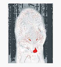 Canis Lupus Photographic Print