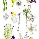 Herbarium / Herbier #3 by Roxanne Bee