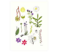 Herbarium / Herbier #2 Art Print
