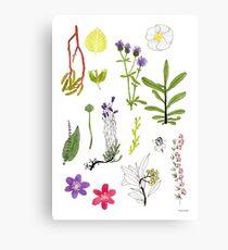 Herbarium / Herbier #2 Canvas Print