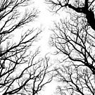 Black and white Winter trees by SarahMinchin