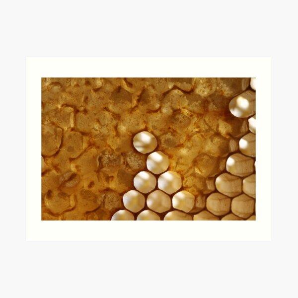 honey or not honey? Art Print