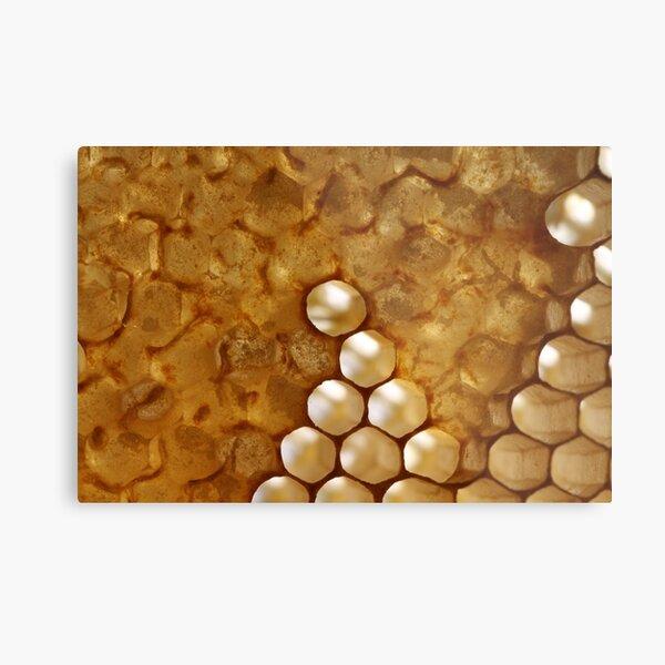 honey or not honey? Metal Print