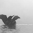 Common Loon - Wilson Lake by Jim Cumming