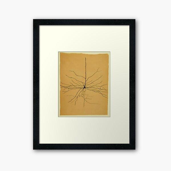 Pyramidal Cell in Cerebral Cortex, Cajal Illustration Framed Art Print