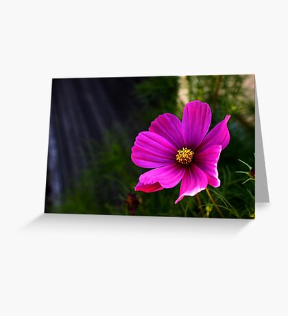 Heavenly Daisy Greeting Card