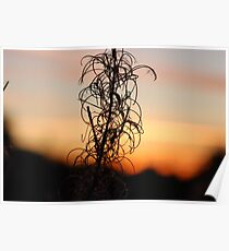 Leafy Sunset Silhouette Poster