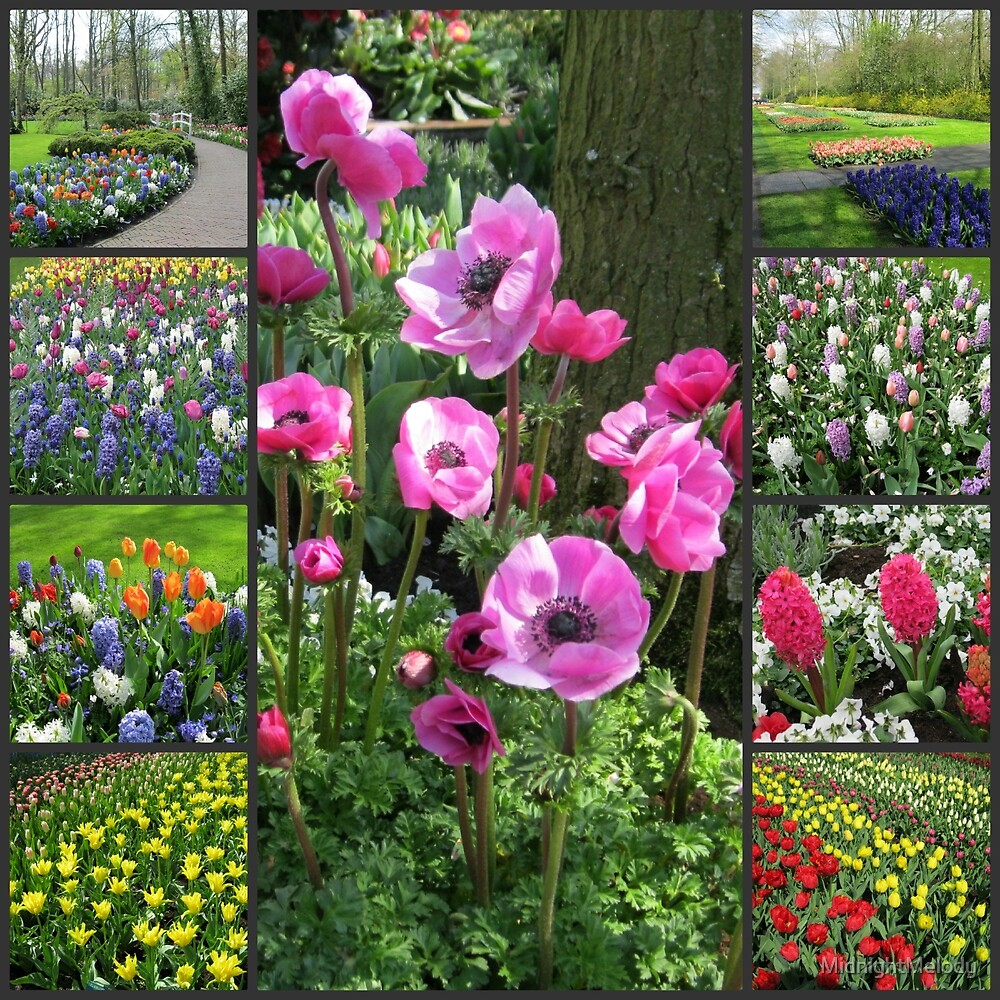 Keukenhof Collage featuring Pink Anemones by MidnightMelody