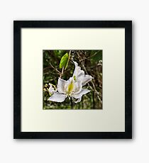 Beautiful Butterfly tree flower Framed Print