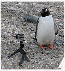 Gentoo penguin selfie in Antarctica  Poster