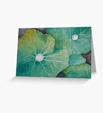 In Rosemary's Garden - Nasturtium Leaf with Dew Drops Greeting Card