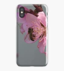 Honey Bee On Open Peach Tree Blossom iPhone Case/Skin