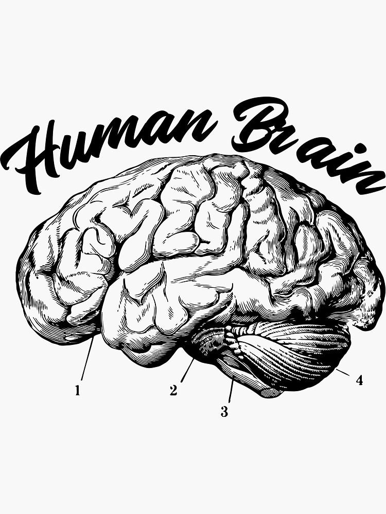 Human Brain Design by ds-4