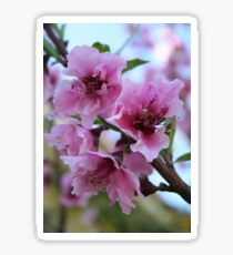 Peach Tree Blossom Close Up Sticker
