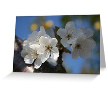 Close Up Of White Cherry Blossom Flowers Greeting Card