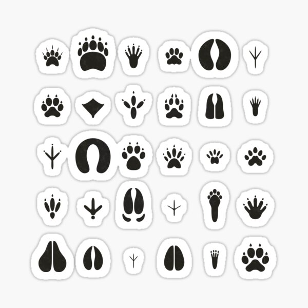 Common Animal Tracks Sticker