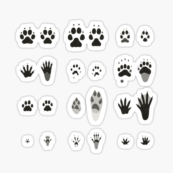 Common Animal Tracks (Hidden Tracks; English) Sticker