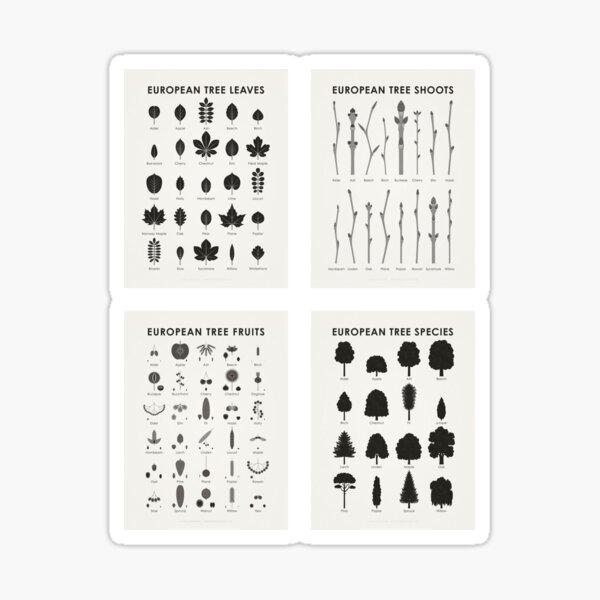 Infographic Tree Science Set (English) Sticker