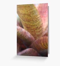 Crosshatched plant - 2011 Greeting Card