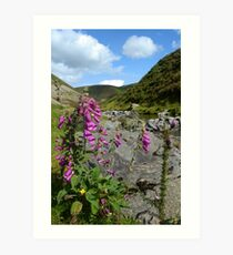Scottish scenery Art Print